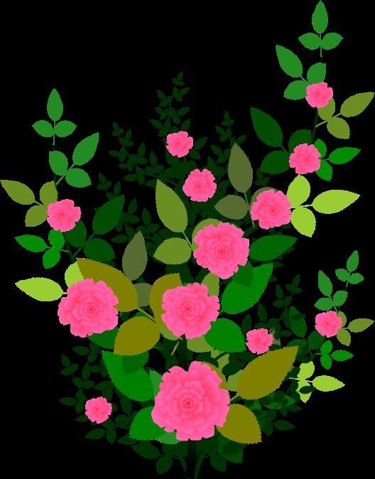 Pink Rose clipart rose bush Rose clip bush rose (21+)