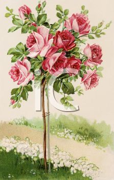 Pink Rose clipart rose bush Best of Pinterest Victorian Free