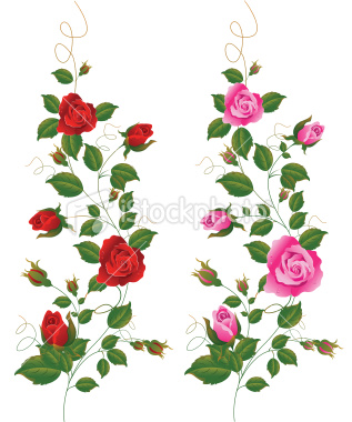 Rose Bush clipart rose vines #7