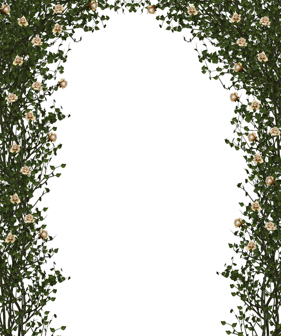 Rose Bush clipart rose vines #13