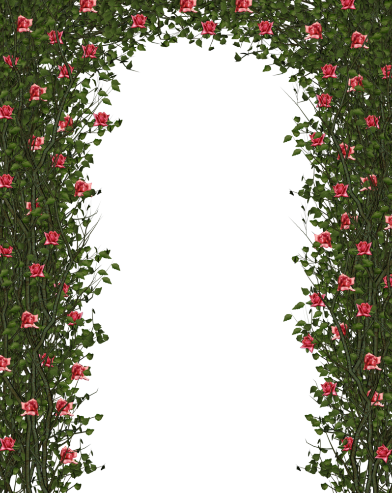 Rose Bush clipart rose vines #12