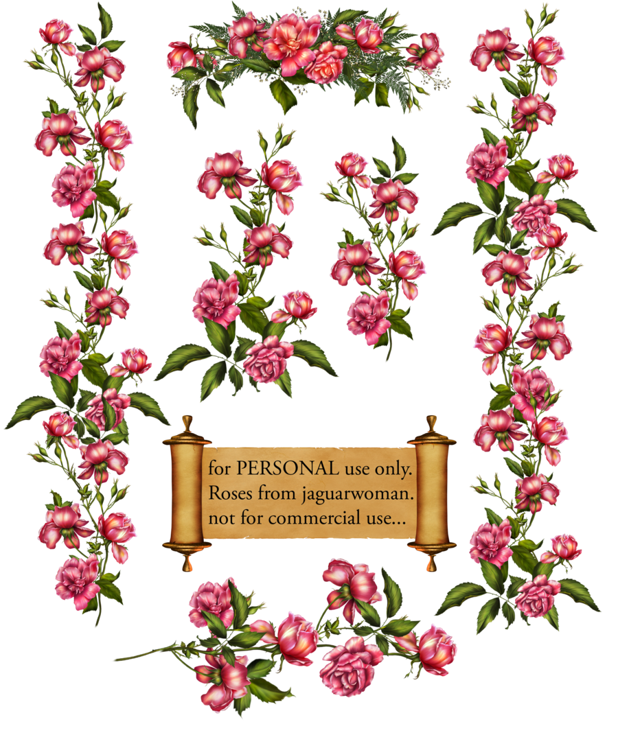 Rose Bush clipart rose vines #11