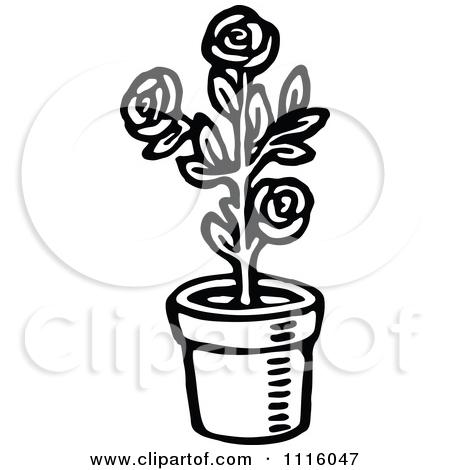Rose Bush clipart shrub plan #11