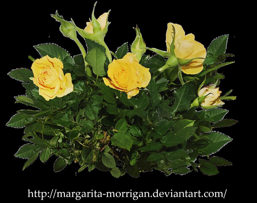 Rose Bush clipart shrub plan #5