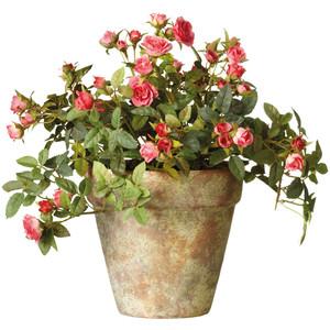 Rose Bush clipart shrub plan #8