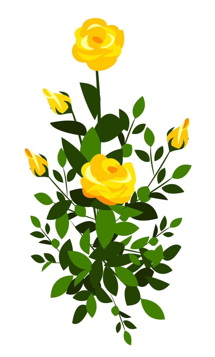Rose Bush clipart shrub plan #4