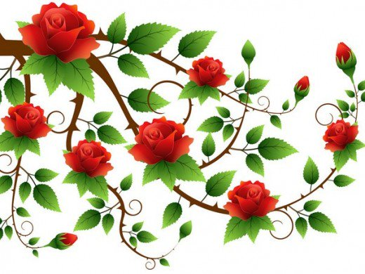 Rose clipart branch #13