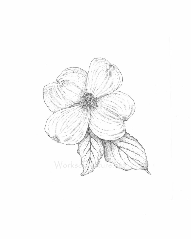 Rose clipart pen and ink #15