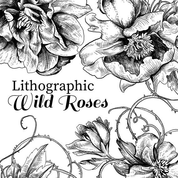Rose clipart pen and ink #10