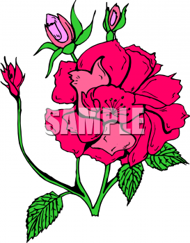 Rose clipart sympathy flower #12