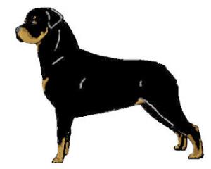 Rottweiler clipart Rottweiler Download Clip Standing Art