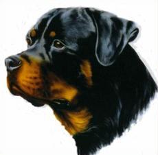 Rottweiler clipart Dogs Rottweiler pets Clipart Rottweiler