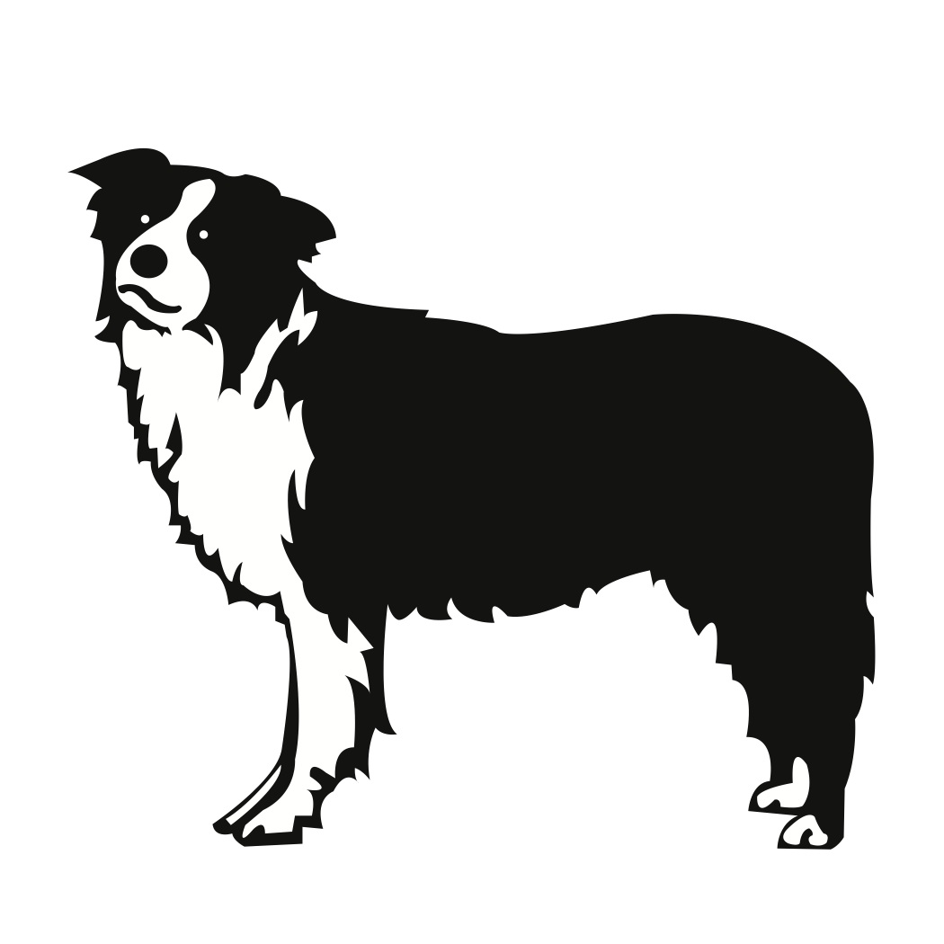 Border Collie clipart silhouette Collie Download #18 drawings Rough