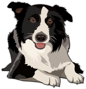 Bearded Collie clipart malinoi Collies training Category Proper Brilyn