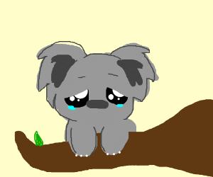Sad clipart koala #10