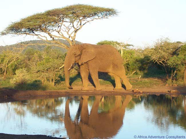 Adventure clipart african safari Pinterest  African on Africa
