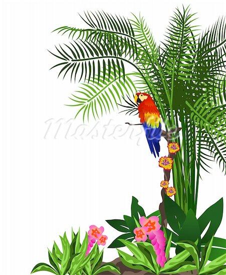 Scenery clipart tropical bird #15