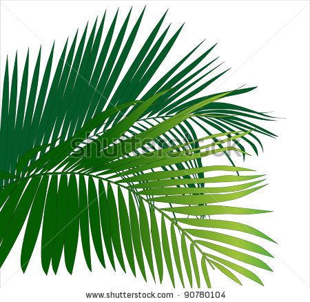 Drawn rainforest fern tree Trees (tropical image) bible Jungle