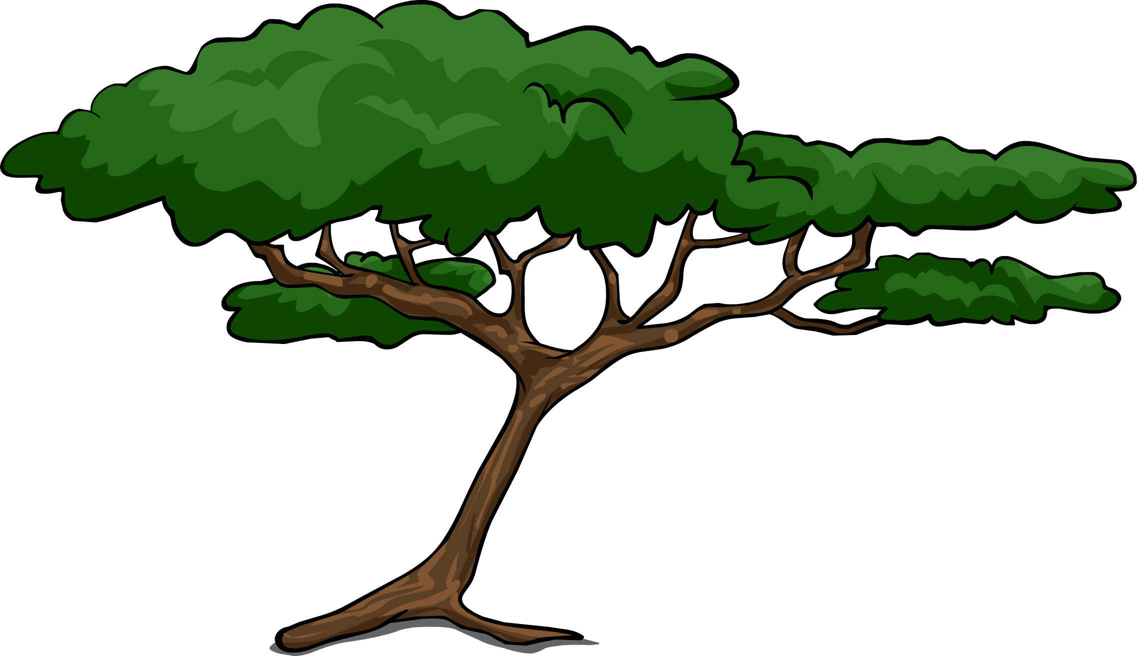 Realistic clipart acacia tree #4