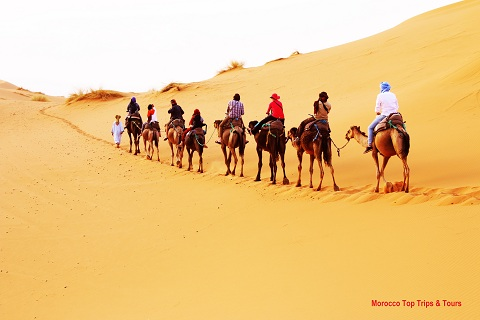 Sahara clipart camel ride #8