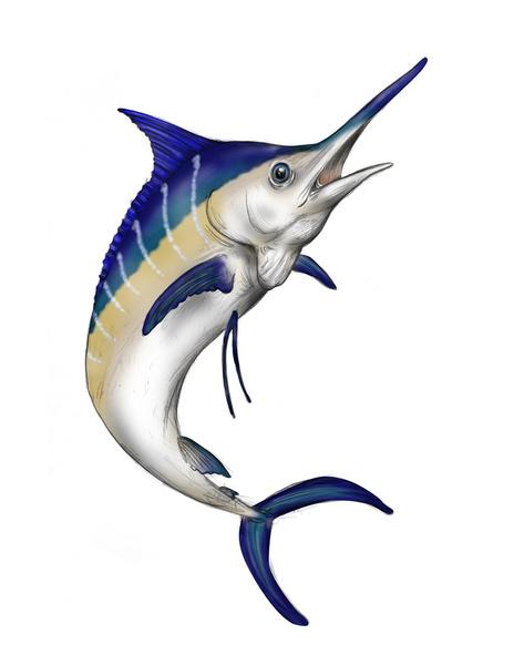 Sailfish clipart blue marlin #2