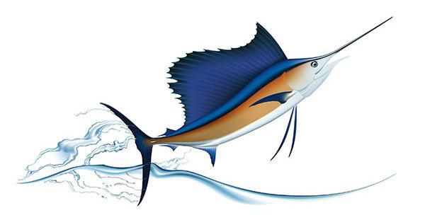 Sailfish clipart drawing #5