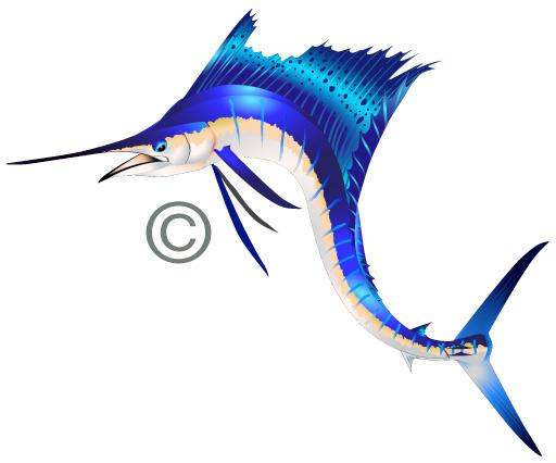 Sailfish clipart marlin #13