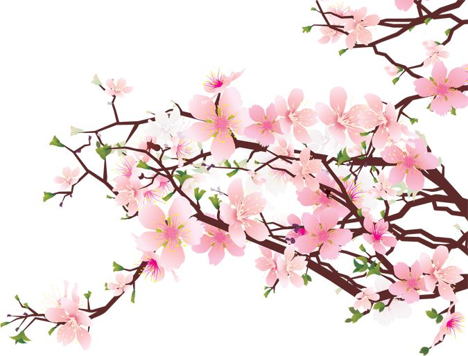Blossom clipart japan On / 272 clip Pinterest