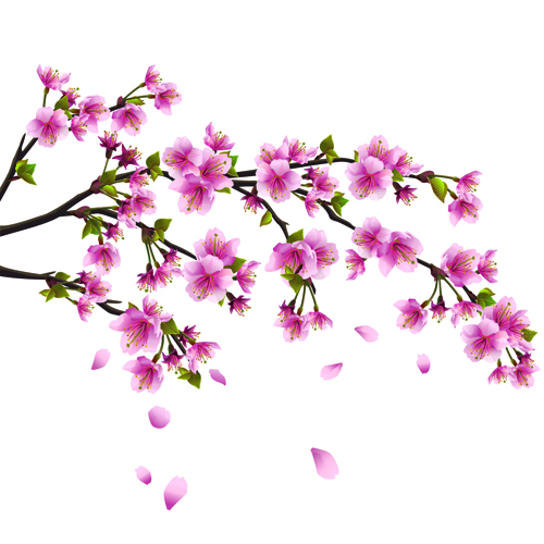 Sakura Blossom clipart cartoon #5