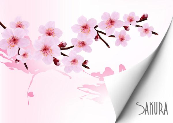 Sakura Blossom clipart kartun #5