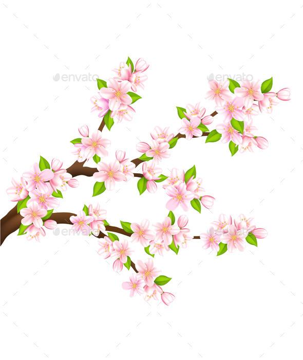 Sakura Blossom clipart kartun #1