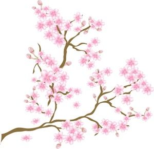 Sakura Blossom clipart transparent #15