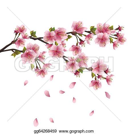 Drawn sakura blossom clip art Royalty blossom Japanese cherry ·