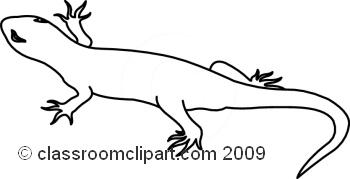 Salamander clipart black and white #12