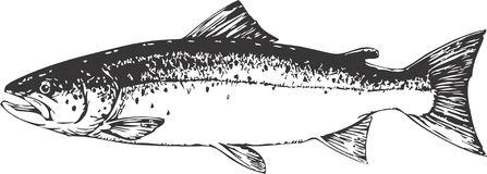 Salmon clipart Salmon clipart megapixl 2 image