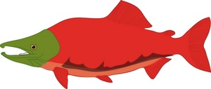 Salmon clipart Cooked clipart salmon image fry