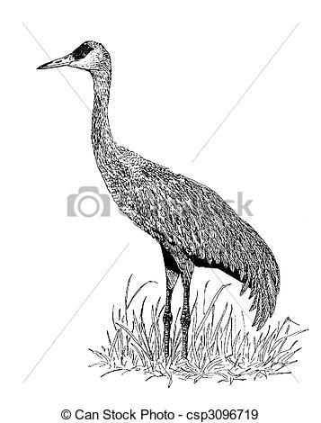 Sandhill Crane clipart Sandhill csp3096719 Illustration canadensis Grus