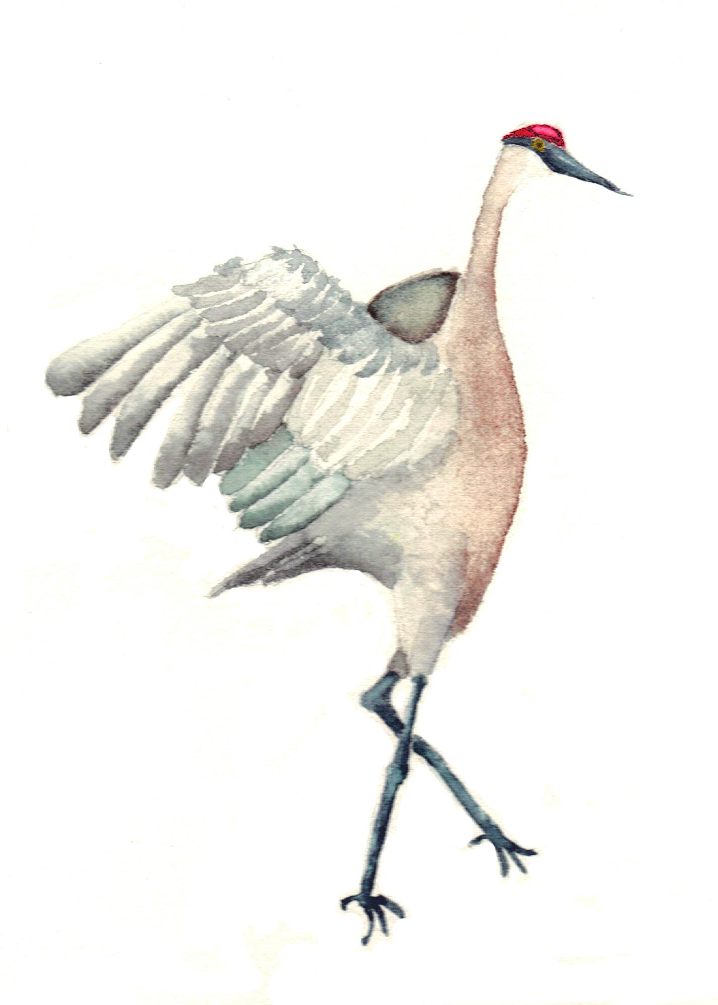 Sandhill Crane clipart Sandhill clip photo#17 Art Clip