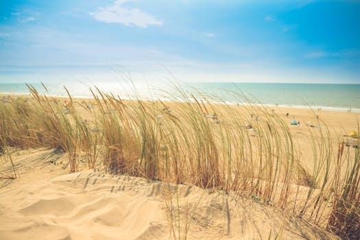 Sandy Beach clipart beach scenery Of Stock Free Free Photos