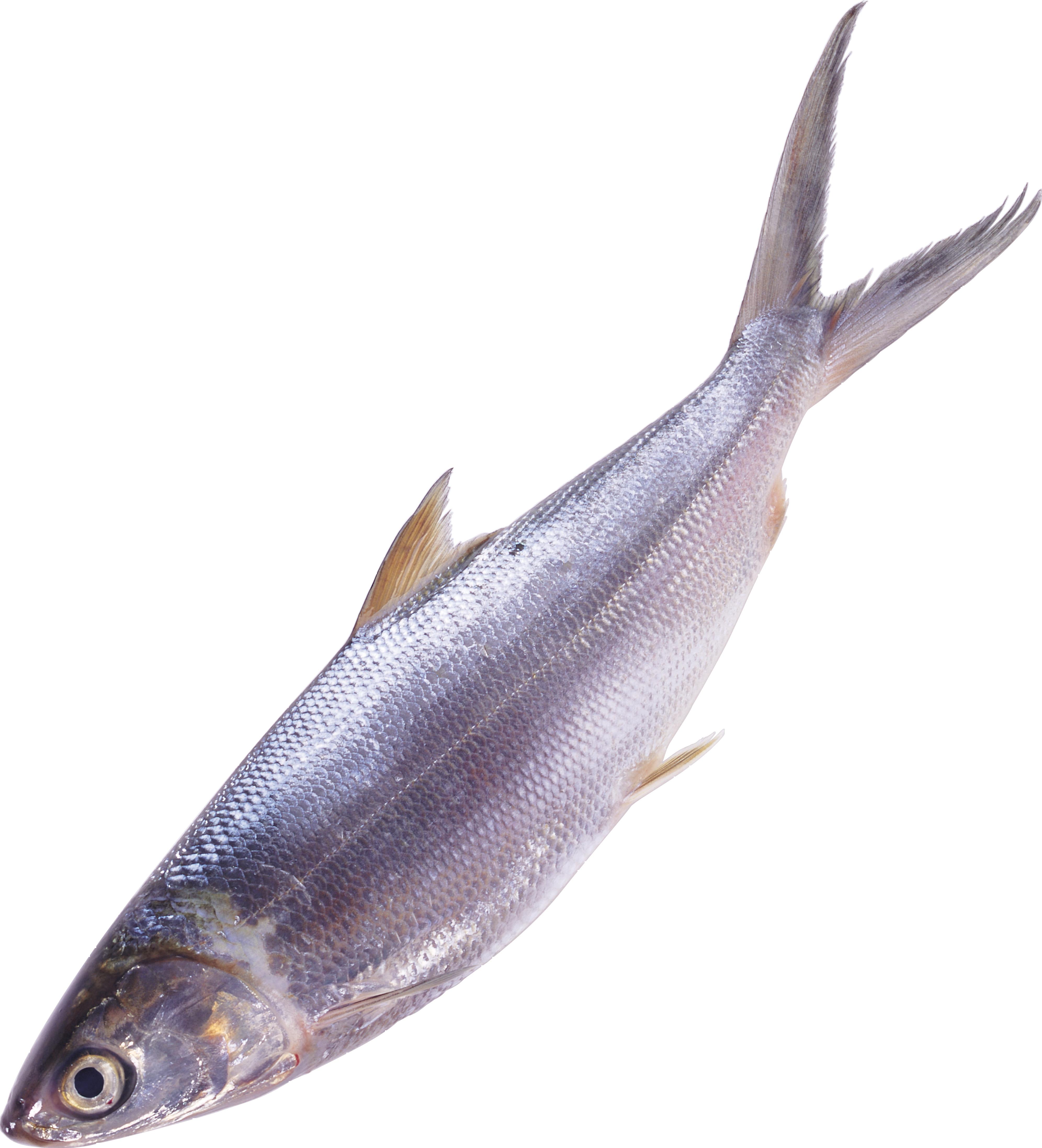 Sardine clipart fish meat #3