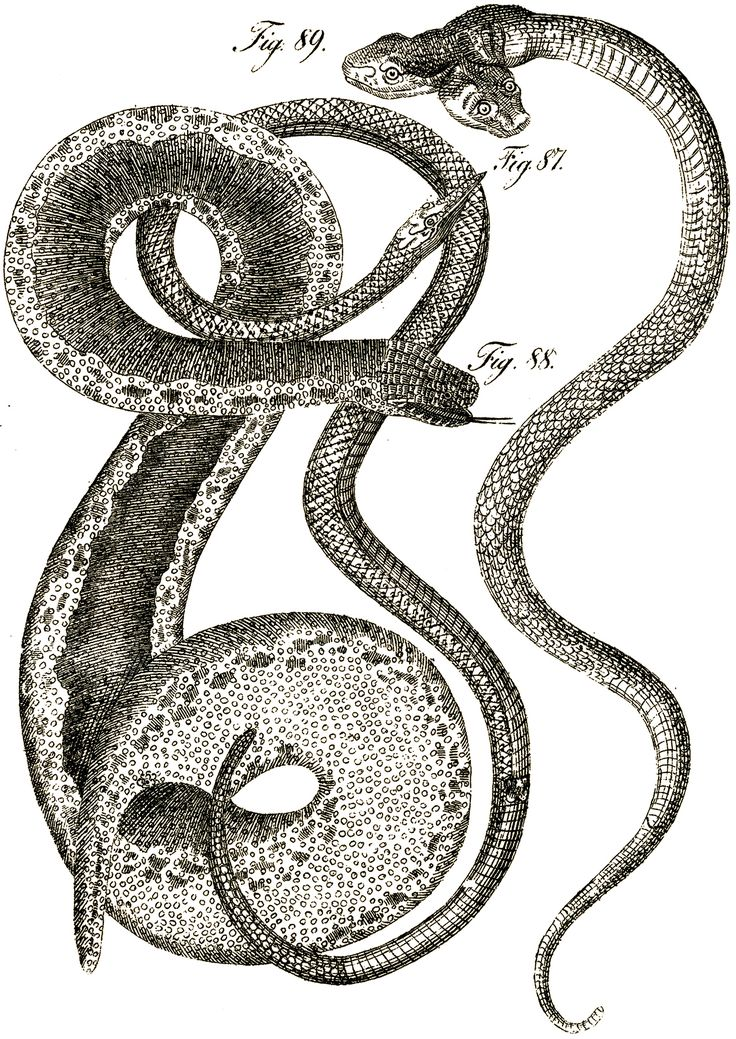 Satanism clipart viper snake Best about Snake and Snakes