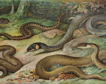 Satan clipart snake in grass Reptile Aspic Snakes book Etsy