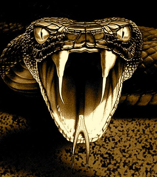 Satanism clipart viper snake On best Pinterest 12 about