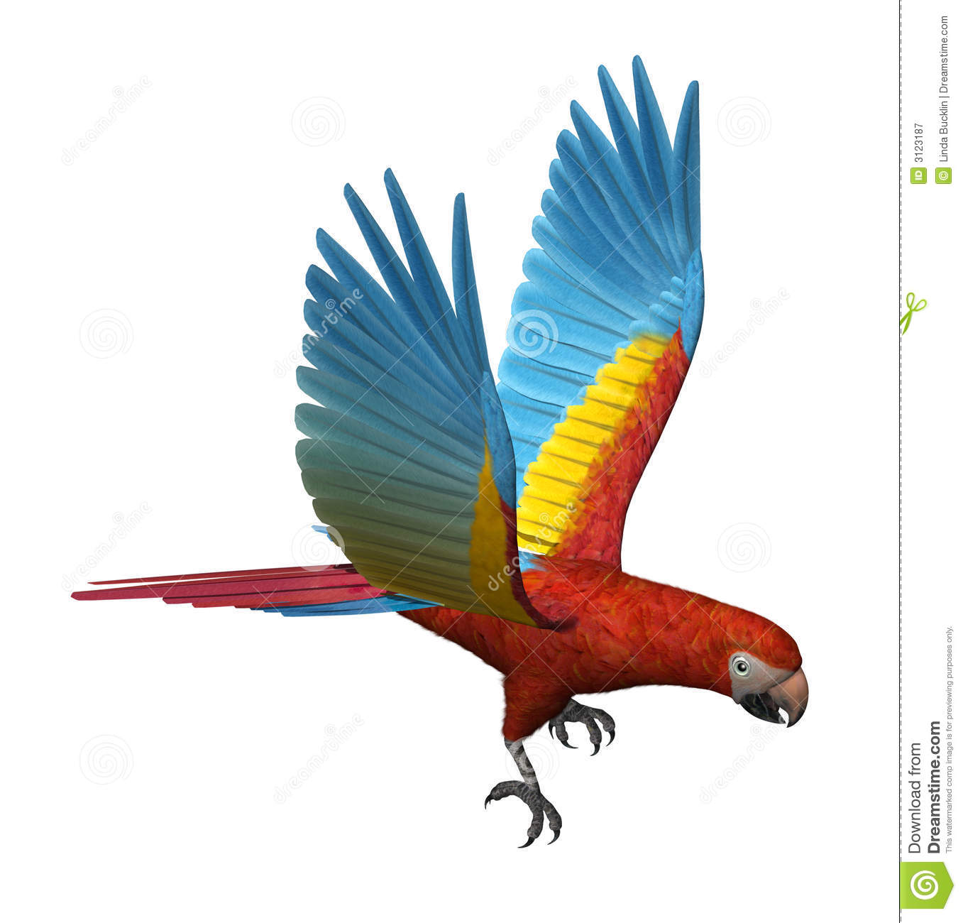 Scarlet Macaw clipart #11