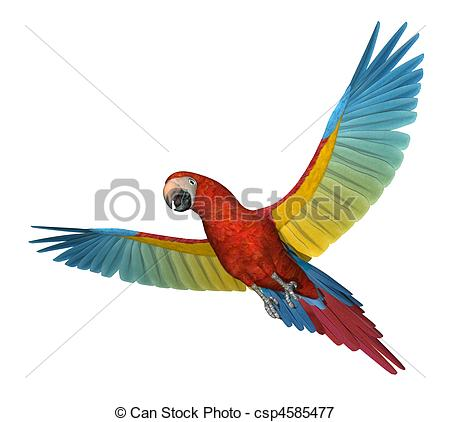 Scarlet Macaw clipart #9
