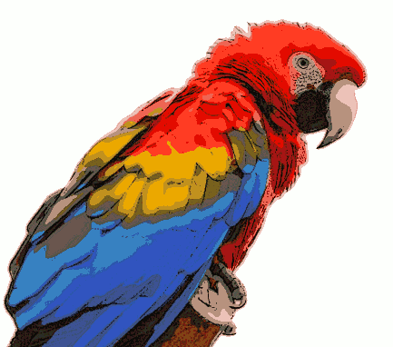 Scarlet Macaw clipart #3