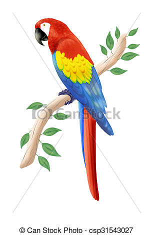 Scarlet Macaw clipart #7