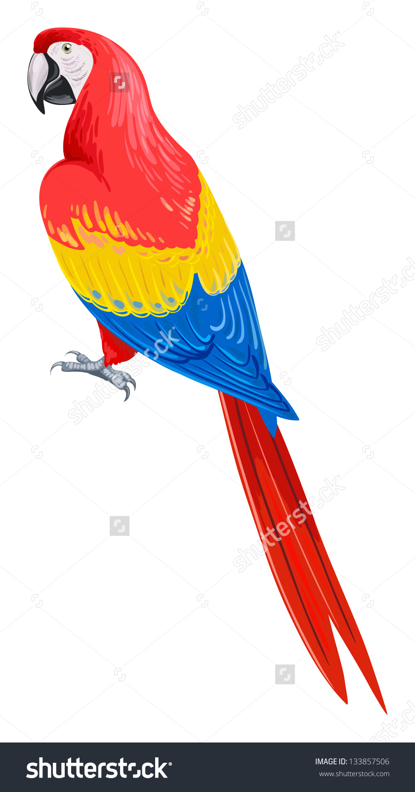 Scarlet Macaw clipart animated #15
