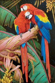 Scarlet Macaw clipart drawing #14