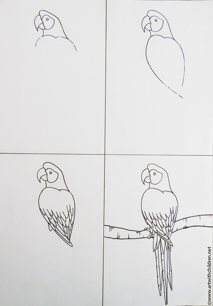 Scarlet Macaw clipart drawing #12